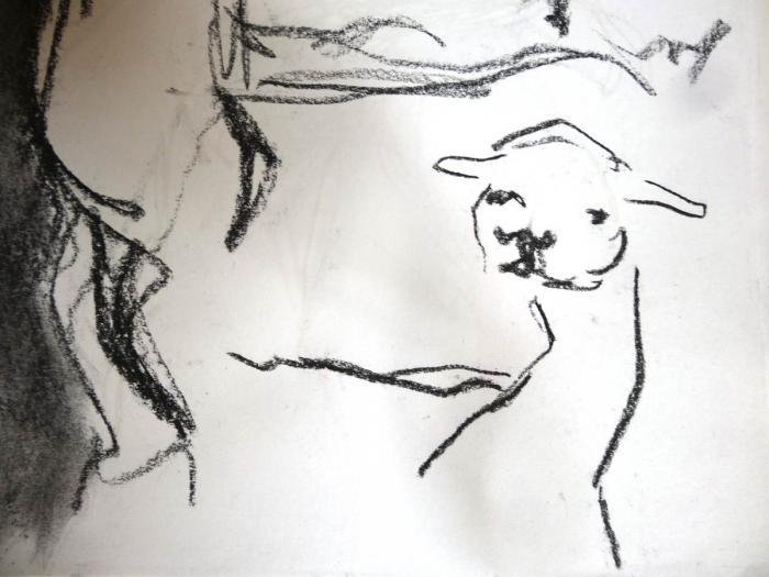 croquis d'animaux au jardin des Plantes 04