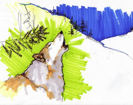 dessin de loup - julie loomis