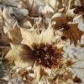 plantes - graphisme au naturel