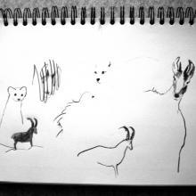 croquis d'animaux au fusain 03